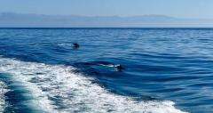 dolphines-santa-rosa-islands