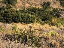 native-birds-santa-rosa-island